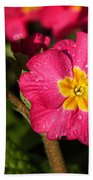 Primulas Beach Towel