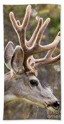 Profile Of Mule Deer Buck With Velvet Antler  Beach Towel