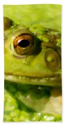 Profiling Frog Beach Towel by Optical Playground By MP Ray
