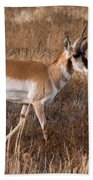 Pronghorn Antelope 2 Beach Towel