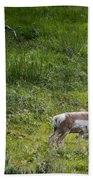 Pronghorn Antelope Among Wildflowers Beach Towel