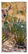 Pronghorn Antelope Beach Towel