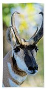Pronghorn Antelope Portrait Beach Towel