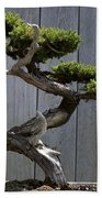 Prostrate Juniper Bonsai Tree Beach Towel