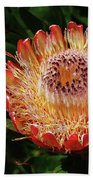 Protea Flower 2 Beach Towel