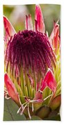 Protea Sugarbush Beach Towel