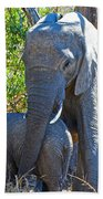 Protective Mother Elephant In Kruger National Park-south Africa Beach Towel