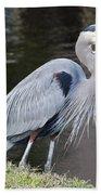Proud Great Blue Heron Beach Towel