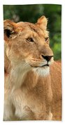 Proud Lioness Beach Towel