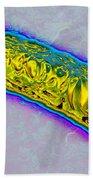 Pseudomonas Bacterium Beach Towel