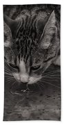 Puddle Drinking Kitty Beach Towel