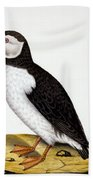 Puffin, Marmon Fratercula, Circa 1840 Beach Towel