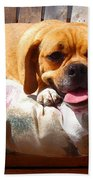 Puggle Lounging Beach Towel