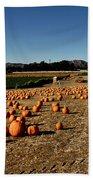Pumpkin Field Beach Towel
