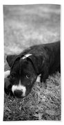 Puppy Eyes In Black And White Beach Towel