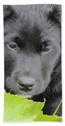 Puppy Love Beach Towel
