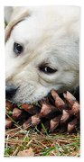 Puppy With Pine Cone Beach Towel