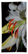 Pure Lily Beach Towel