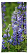 Purple Alaskan Lupines Beach Towel