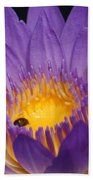 Purple And Bright Yellow Center Waterlily... Beach Towel