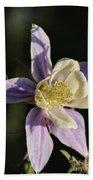 Purple And Cream Columbine Flower Beach Towel