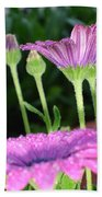 Purple And Pink Daisy Flower In Full Bloom Beach Towel