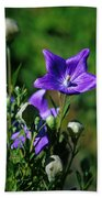 Purple Balloon Flower Beach Towel