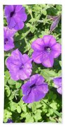 Petunias Purple Club Beach Towel