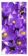 Purple Crocus Spring Welcome Beach Towel