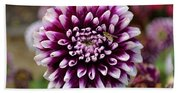 Purple Dahlia White Tips Beach Towel
