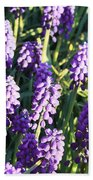 Purple Grape Hyacinth  Beach Towel
