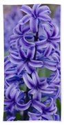 Purple Hyacinth Beach Towel