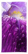 Purple Iris - 2 Beach Towel