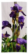 Purple Iris Stalk Beach Towel