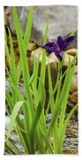 Purple Irises Growing In Waterfall Beach Towel