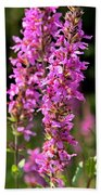 Purple Loosestrife Tall Beach Towel