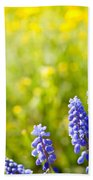 Blue Muscari Mill Bunches Of Grapes Close-up  Beach Towel