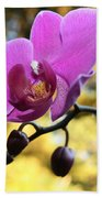 Purple Orchid In September Sun Beach Towel