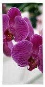 Royal Orchids  Beach Towel