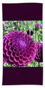 Purple Perfection Dahlia Flower Beach Towel