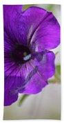 Purple Petunia 2013 Beach Towel