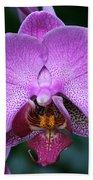 Purple Phalaenopsis Orchids Beach Towel