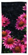 Purple Pow Echinacea  Beach Towel
