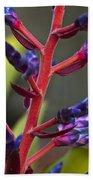 Purple Spike Bromeliad Beach Towel