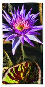 Purple Star Water Lily  By Diana Sainz Beach Towel