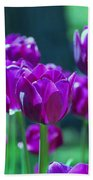 Purple Tulips Beach Towel