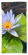 Purple Water Lily In Pond. Beach Towel