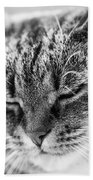 Purring Cat Beach Towel