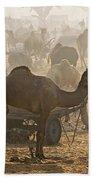 Pushkar Camel Fair - India Beach Towel