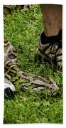 Python Snake In The Grass And Running Shoes Beach Towel